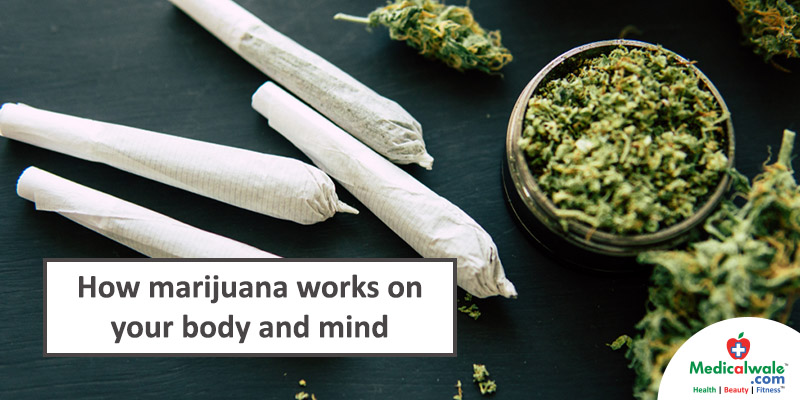 How marijuana works on your body and mind